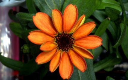 На МКС вперше в історії розпустилася квітка