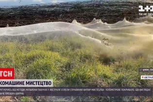 Новости мира: в Австралии миллионы насекомых сплели паутину, что покрыло побережья озера