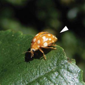 Вчені виявили новий вид гриба і назвали його на честь карантину