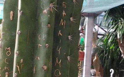 Туристы из РФ испортили столетние кактусы в Ялте оскорбительными надписями про Обаму