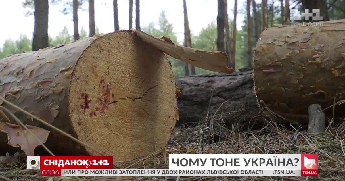 Большая вода: действительно ли запад Украины тонет из-за вырубки лесов
