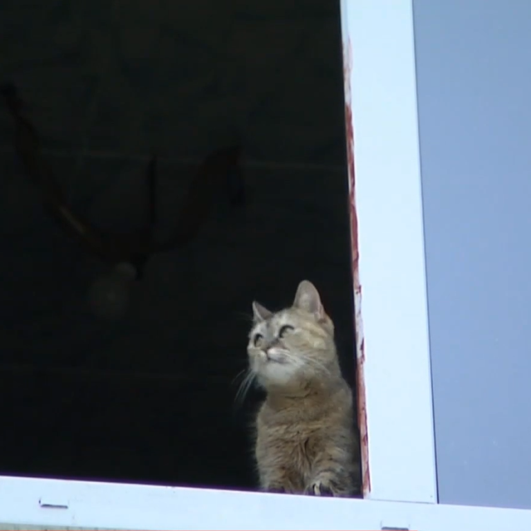 НП у гуртожитку в Кропивницькому: з 8 поверху випала 18-річна студентка