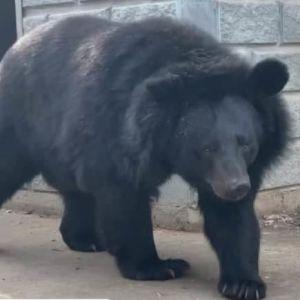Під Запоріжжям у зоопарку потоваришували ведмідь і кішка: зворушливе відео