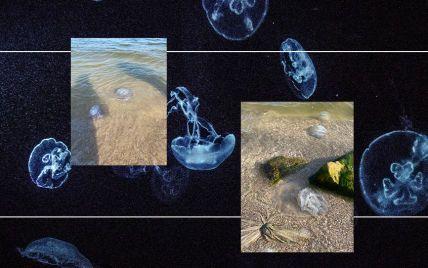 Нашествие гигантских медуз и запах тухлой рыбы в Кирилловке: эксперт объяснил, что происходит с Азовским морем