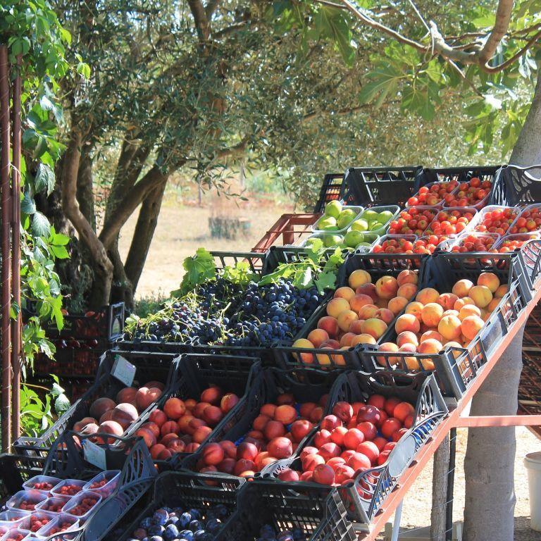 В Україні через дощі захмарні ціни на сезонні фрукти та овочі: скільки коштують нині і коли подевшають